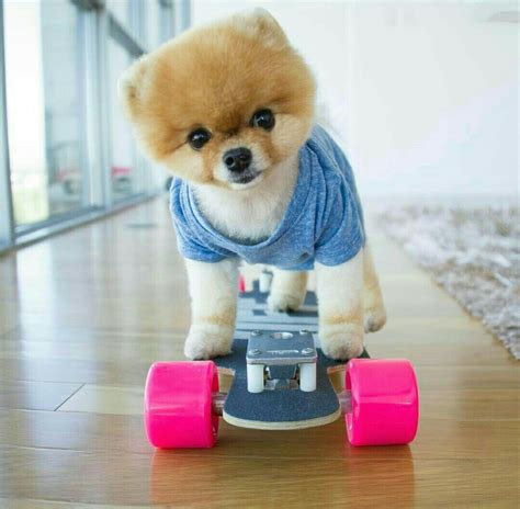 what of is jiffpom jiffpom jiffpom pies met and