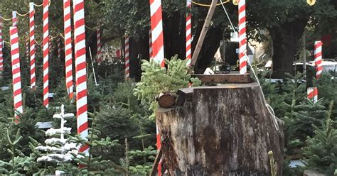 where to buy a x mas tree in san francisco and around