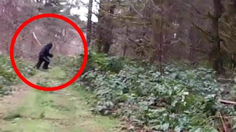 bigfoot pictures 10 real bigfoot sightings on covered