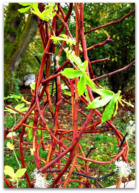How To Make A Trellis For Potted Plants how to make a trellis for your potted plants clover farm