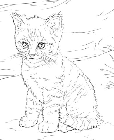 adorable kittens coloring pages cute kitten coloring page free printable coloring pages
