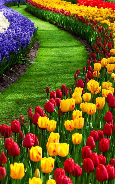 live wall garden garden live wallpaper android apps on play