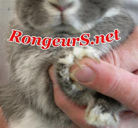 rongeurs s net coupe des ongles et griffes des lapins