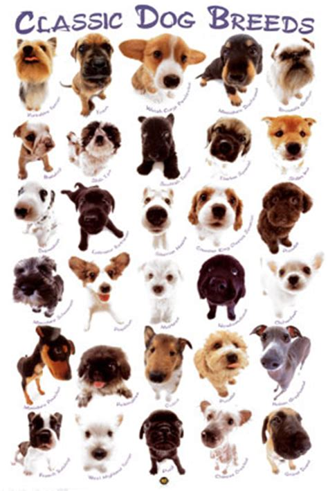 all types of dogs all kinds of dogs with pictures and names breeds picture