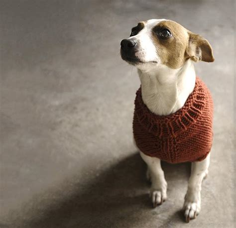 knitting pattern puppy jumper top 5 free dog sweater knitting patterns loveknitting blog