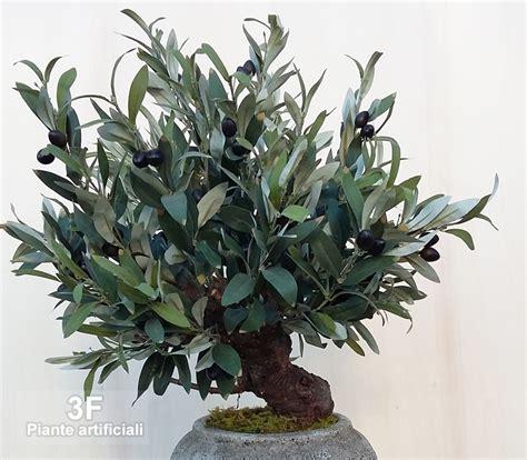 ulivo in vaso prezzo costo piante ulivo in brianza non crescono pi gli ulivi