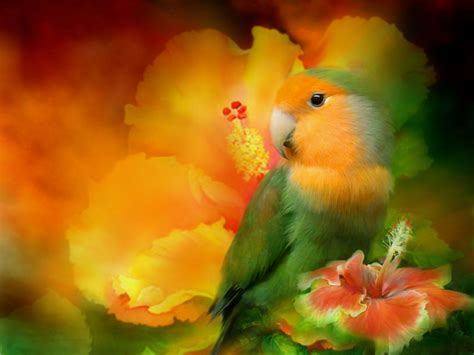 imagenes artisticas gratis download wallpaper wallpapers for desktop parrot photo