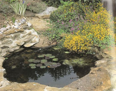 the best plants for a water garden 15 flowers for water garden pool jp s home improvement