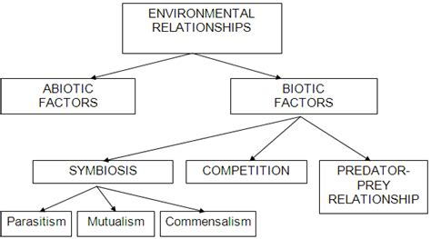 Ecological Relationships Worksheet by Introduction To Ecology Biology Is