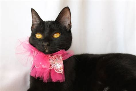 Are Cats The New Must Accessory by Pink Princess Cat Collar Accessory With Silver Butterflies