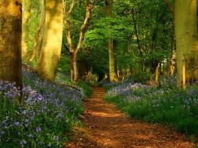 Happy Garden Fall River Ma - 191 por qu 233 los bosques podr 237 an ser el futuro de la econom 237 a ecoosfera