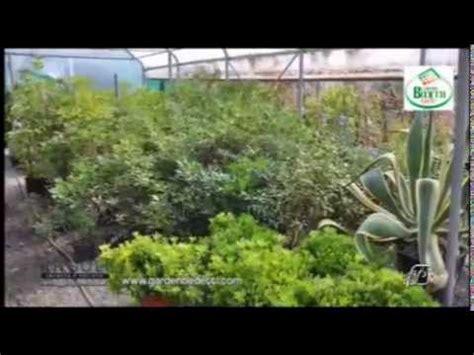arredare il terrazzo con le piante angoli 05 05 2014 arredare balconi e terrazzi con le