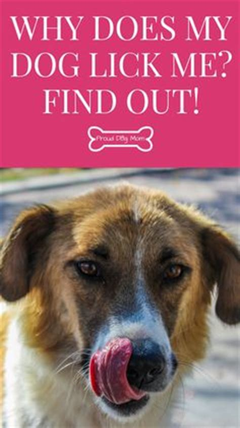 why do dogs always want food 1000 images about proud dog mom on pinterest dog health