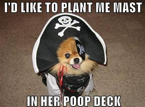Sexually Inappropriate Memes - irti funny picture 727 tags dog mast poop deck pirate