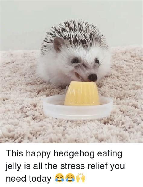 Hedgehog Meme - 2048 hedgehog meme