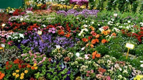 mostra dei fiori firenze ponte 1 176 maggio tra mostra dei fiori e giardini a firenze