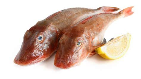 come si cucina il pesce gallinella ricetta gallinella in guazzetto
