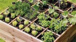 jardinage garden sweet garden