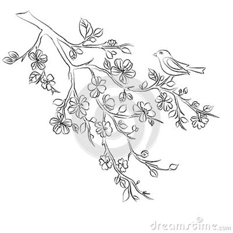 Cherry Blossom Branch Drawing Outline by Twig Cherry Blossoms And Bird Stock Vector Image 56184096