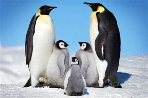 Wall Murals Sale penguin harmony penguin family poster buy online