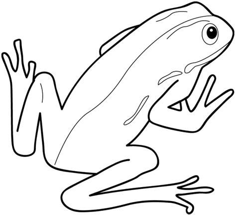 imagenes para colorear rana imagenes hilandy imagen para colorear rana