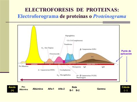 proteinograma o que estudio de proteinas sericas