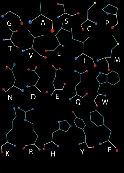 a protein is a polymer that is made of proteins are polymers structural biology for the masses