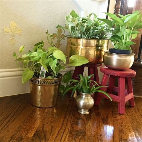 plants in home decor why stick to same terracotas for plants how about brass for a change home decor tips