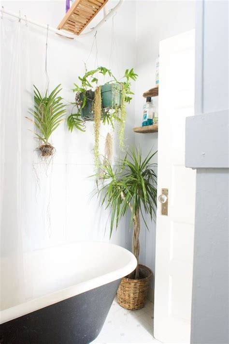 air plants bathroom best plants that suit your bathroom fresh decor ideas