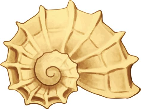 sea shell clip shell clipart yellow sea pencil and in color shell