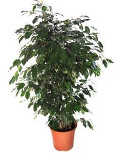 plantes d 233 polluantes pour la chambre 3 3 votre
