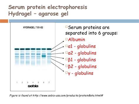 protein electrophoresis urine serum protein electrophpresis