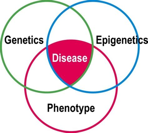 relationship venn diagram venn diagram showing relationship between genetic varia