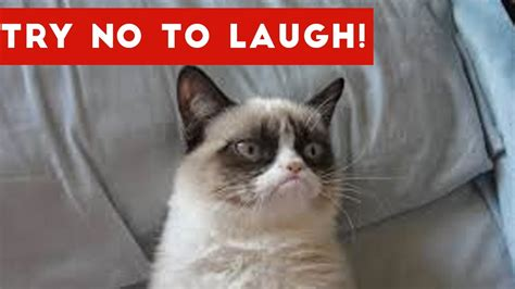 8 Ways To A Laugh At Your Cats Expense by Try Not To Laugh At This Cat Compilation