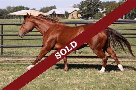 for sale horses tina horses