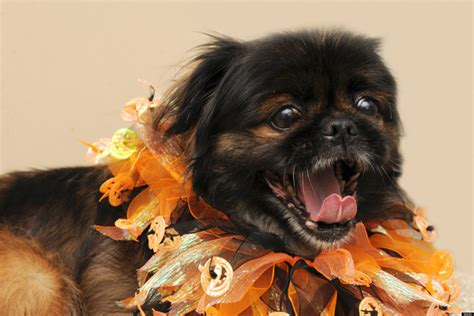 puppies for adoption dc d c adoptable animals take your mind frankenstorm with these animals looking for