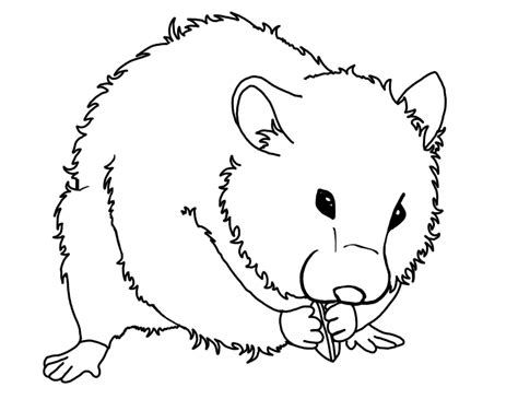 Hamster Coloring Pages Printable hamster coloring page az coloring pages