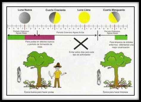 calendario lunar de siembra y trasplantes segn las fases club dominicano de bonsai la luna y los bonsais