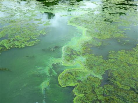 researchers search for clues to toxic algae blooms
