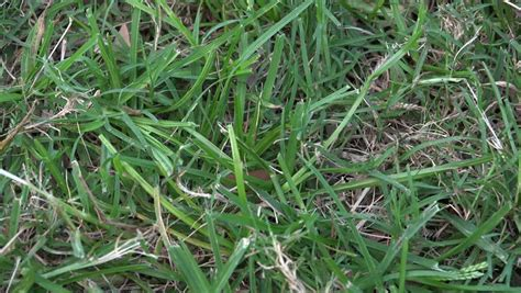 the want is strong with this one grassroots motorsports green grass swaying in the strong wind stock footage video