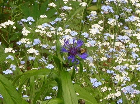 Flowers For The Shade Garden The Best Flowers To Plant In The Shade Garden Guides