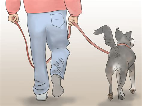 how to your to herd how to teach your to herd 11 steps wikihow