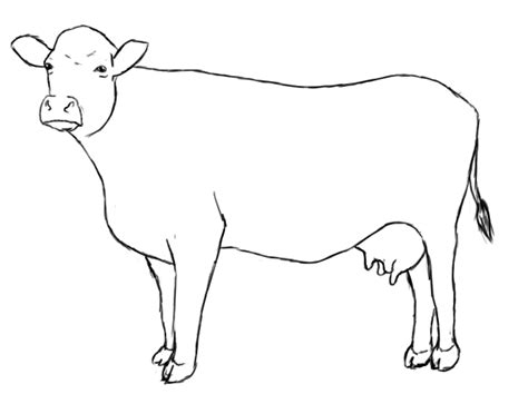 jersey cow coloring page cow drawing