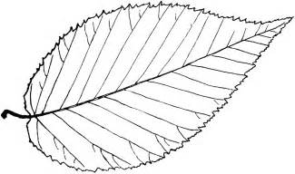 Leaf Outline Shapes by Simple Leaf Outline Clipart Best