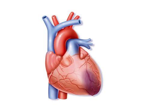 infarto del miocardio bandamobile crean en finlandia una aplicaci 243 n m 243 vil que detecta