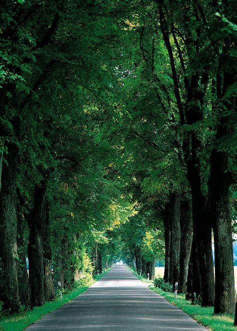 imagenes de paisajes naturales infantiles vinilos de paisajes carretera entre arboles viniliza