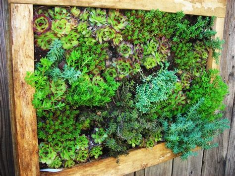 Succulent Frame My Farmscape - 17 best images about outside succulent wall on