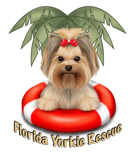 rescue yorkies in florida florida yorkie rescue inc nonprofit in palm city fl volunteer read reviews