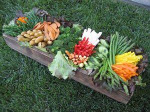 come si coltiva il sedano come coltivare nell orto come fare orto guide per iniziare