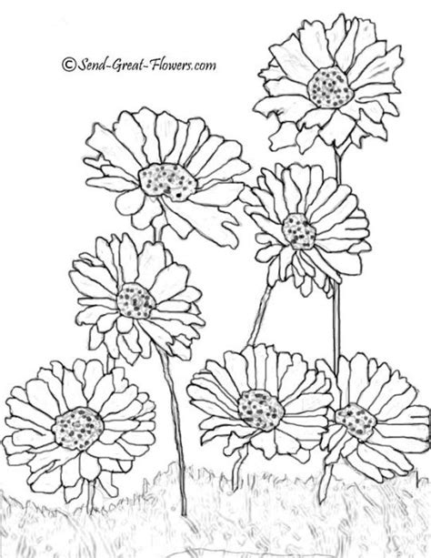 libro summer nights coloring book mejores 746 im 225 genes de blackline flowers en libros para colorear coloring